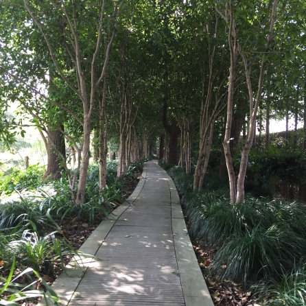 One of the lovely walking trails on our compound.
