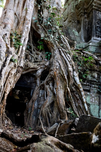 The stunning Ta Prohm